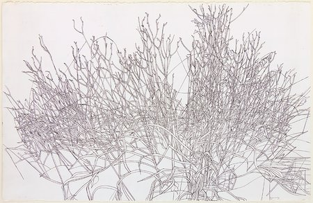 Untitled (Grasses)