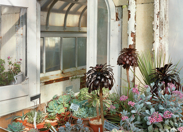 Esther Pullman, Private Estate Greenhouse—Succulents, Wellesley, MA, 2003. Archival inkjet print produced from a scanned film negative, printed on Canson Baryta Photographique paper.